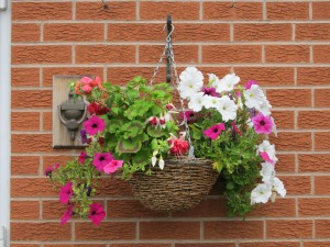 The quintessential hanging basket