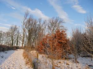 Blue skies, russet leaves, silvery tracks