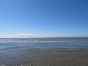 The Wadden Sea, a haven for migratory birds