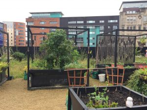 The raised bed allotments