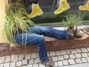 Interesting plant display in Bad Schandau