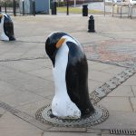 One of the sad looking penguins circling the Discovery
